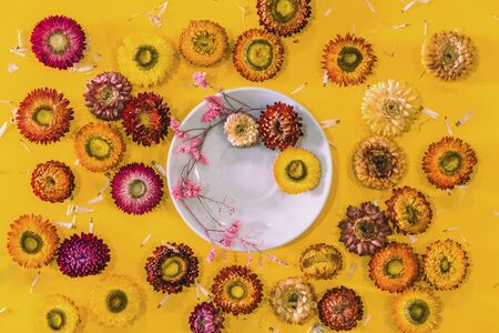 Top view concept of pastel yellow background Colorful flowers Helichrysum bracteatum concept postcard.