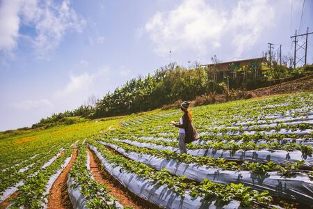 Asian woman travel nature. Travel relax. Girl reading a book In the vegetable garden. Nature Education Write a note in the garden Strawberry. Thailand 写真素材
