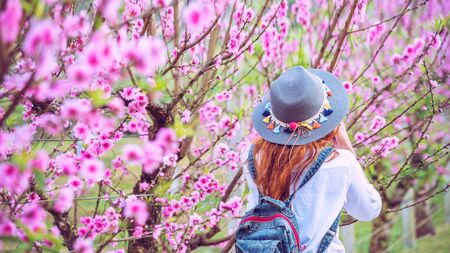 woman traveler with backpack holding hat Travel to see the pink cherry blossoms and enjoying a beautiful nature. wanderlust travel concept. Stok Fotoğraf