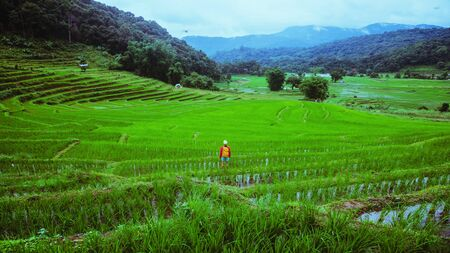 Freedom woman traveler nature. Travel relax. Walking take a photo of rice fields.rainy season in Chiang Mai, Thailand. travel backpack