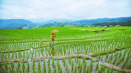 A girl with a backpack walking on a rice field While holding an umbrella in his hand. Traveling in the rainy season. Travel backpack 免版税图像