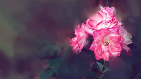 Pink rose background. Digital drawing, rose oil paint. Full frame, Space for text. background flower. 免版税图像