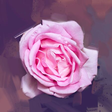 Pink rose background. Digital drawing, rose oil paint. Full frame, Space for text. background flower. Stok Fotoğraf