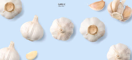 Garlic isolated on blue background. Cooking spices