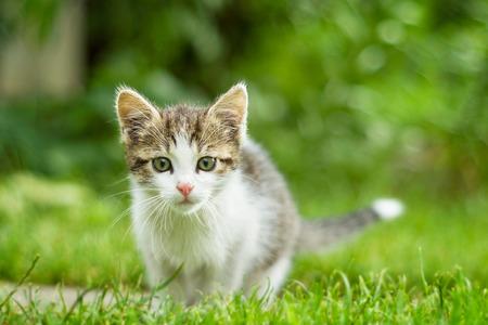 greeneyes: Cat looking at the camera.