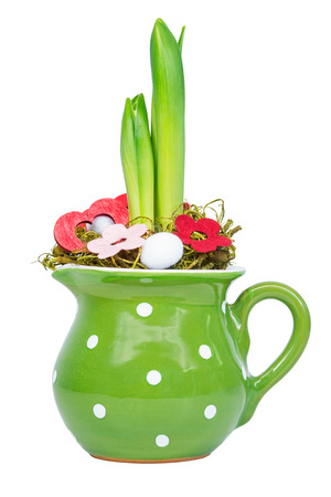 unfold: Hyacinth in green pot with decoration isolated against white background