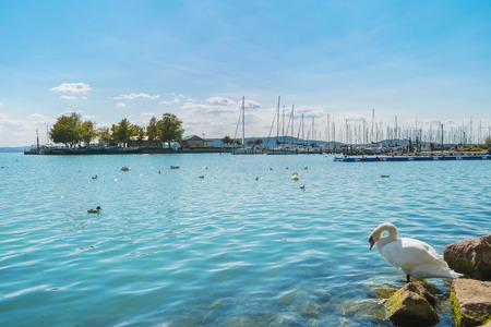 Haven van Balatonfured en het Balatonmeer met boten en vogels in Hongarije