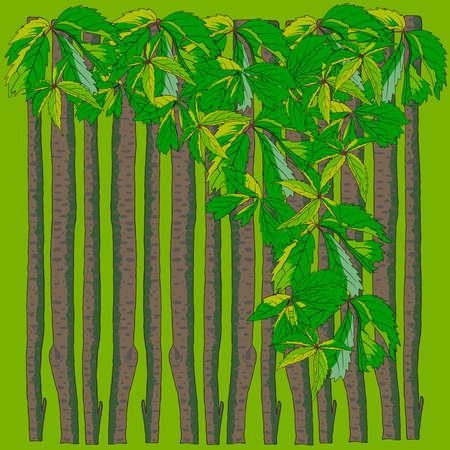 virginia creeper on wooden fence vector Ilustracja