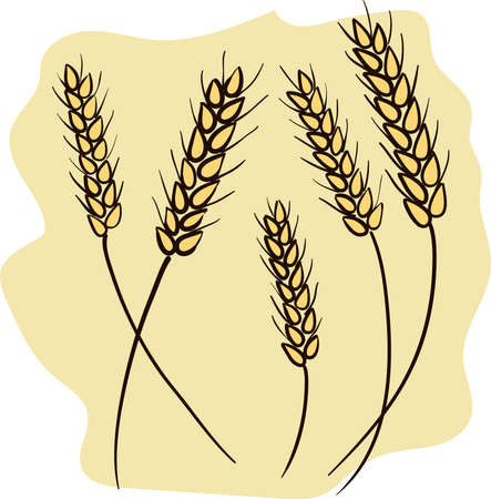 Several wheat ears. Hand drawn vector illustration.