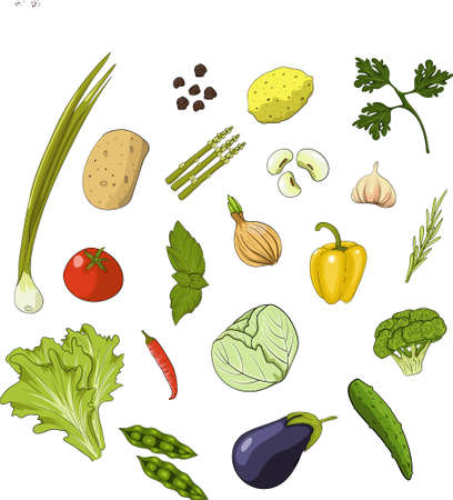 Set of vegatables, spices, herbs on white background. Cartoon style vector illustration.