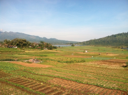 sulawesi: Field in South Sulawesi Indonesia