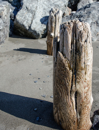 piling: The tide wears down pilings from a old structure on the beach Stock Photo