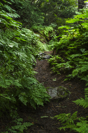 subtropical: A dirt path winds uphill through a subtropical rain forest Stock Photo