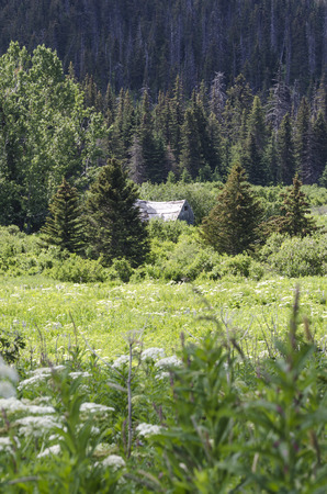 homesteads: A abandoned cabin is the only trace of the Alaskan homesteads of the 1930s