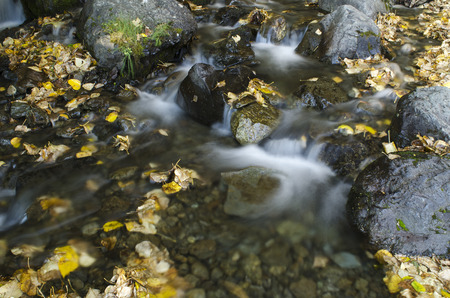 Leaves are scattered around by the fast moving water of a small water fall.