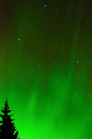 northern light: A green Aurora outlines a tree with a star field in the background.