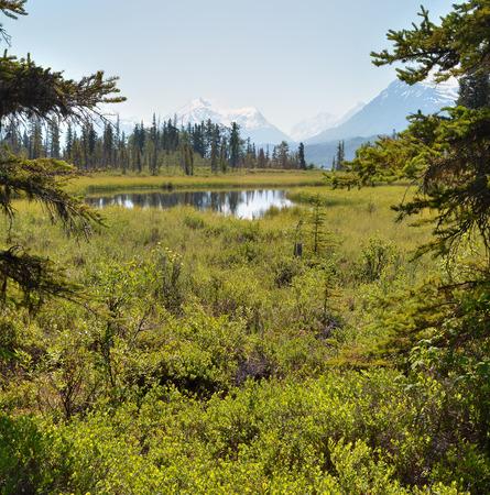sitka: A wide smooth stream flows through river grasses on the Kenai Pennisula in Alaska.
