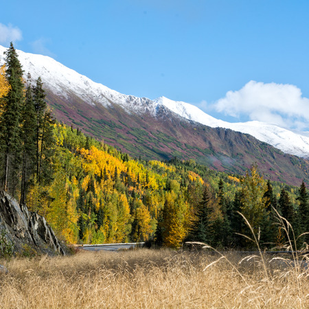Reds and golds cover the hillside along the Sterling Highway on Alaskas Kenai Pennisula.
