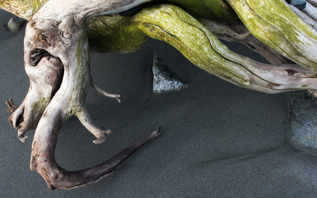 A sea weathered branch came to rest on a grey sand beach amongst small rocks.