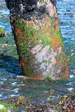 Bright green alge clings to an exposed rusting pipe
