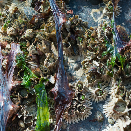 barnacles: Barnacles have pulled back into their tubes hiding from the sun after the tide has left high and dry.