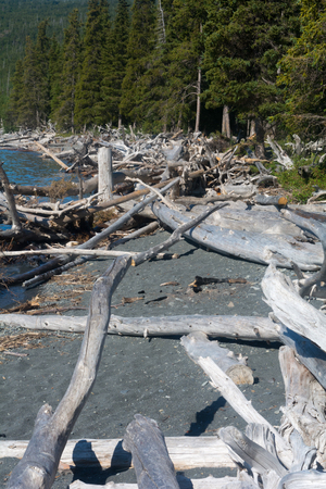 jumbled: Tons of driftwood has been tossed up on a narrow gravel beach with the forest pressing up against it.