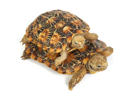 two tortoises on top of each other