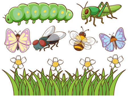 Isolated picture of different insects illustration 向量圖像