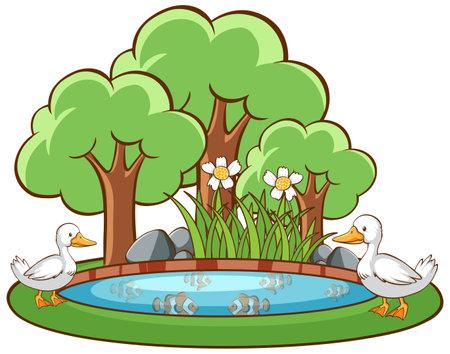 Ducks in the pond on white background illustration 矢量图像