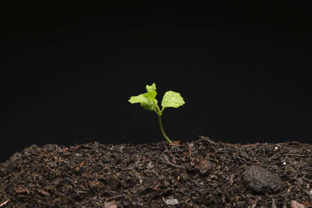 still life growing seedling. Resolution and high quality beautiful photo Reklamní fotografie