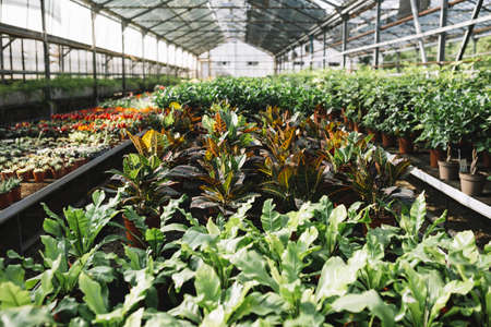 potted plants growing greenhouse. Resolution and high quality beautiful photo