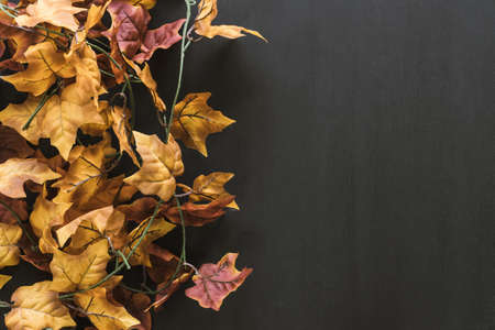 autumn leaves composition. Resolution and high quality beautiful photo