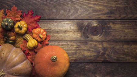 composition ripe pumpkins autumn leaves. Resolution and high quality beautiful photo