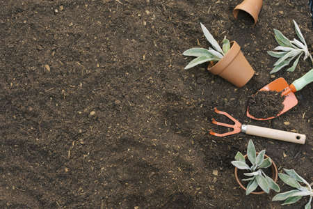 arranged tools gardening soil. Resolution and high quality beautiful photo
