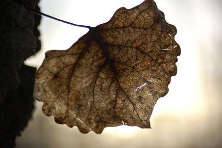 brown leaf 版權商用圖片