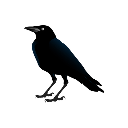 Isolated crow on a white background, Halloween vector illustration Illustration