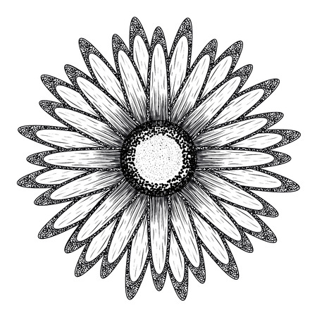Isolated sketch of a flower, Vector illustration Illustration