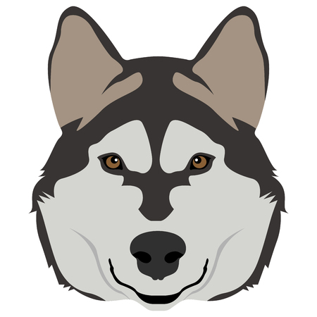 Isolated alaskan malamute face icon on a white background, vector illustration Illustration