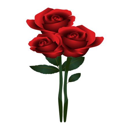 Bouquet of roses on a white background, vector illustration.