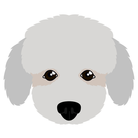 Isolated poodle avatar