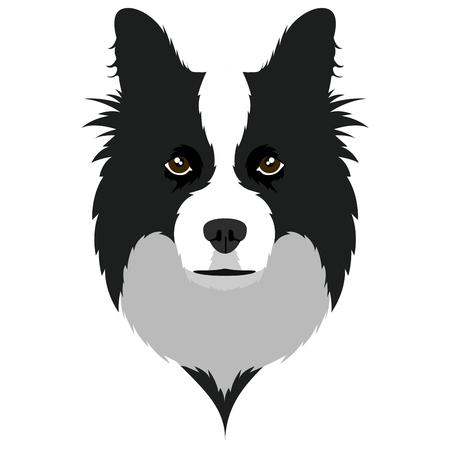 Border collie avatar