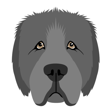 Isolated newfoundland avatar