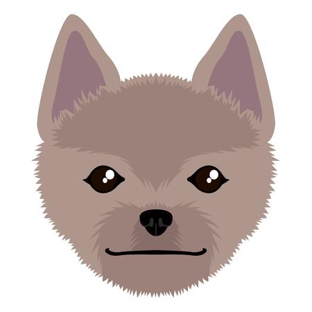 Norwich terrier avatar Illustration