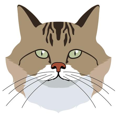 Avatar of a cat. Cat breeds