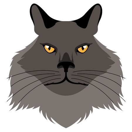 Chantilly tiffany cat avatar. Cat breeds