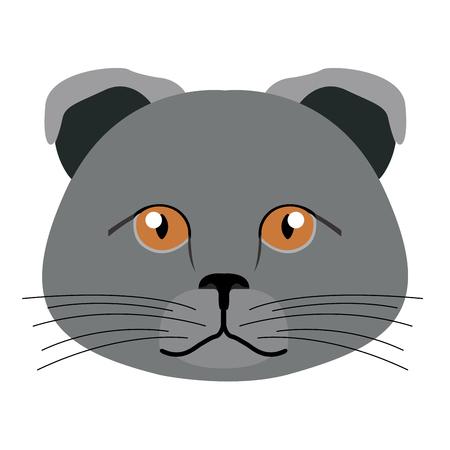 Scottish fold cat avatar. Cat breeds