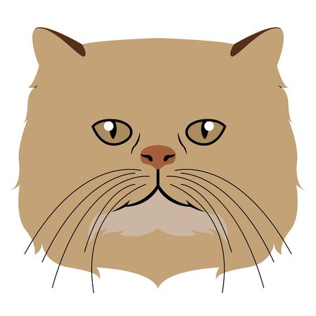 Persian cat avatar. Cat breeds