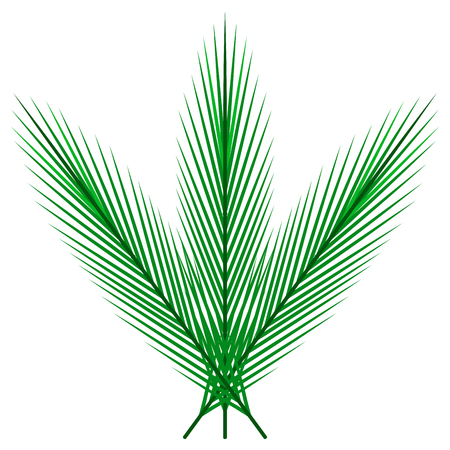 Isolated palm leaves