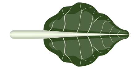 Isolated chard icon image. Vector illustration design
