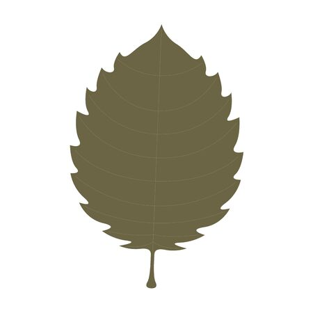 Isolated dry leaf. autumn season - Vector illustration